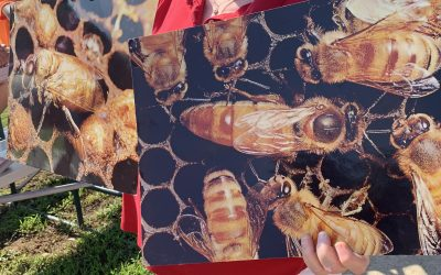 Where are all the HoneyBees Going?